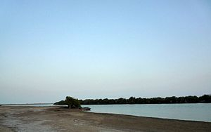Kalba - Mangrove swamp in Khor Kalba