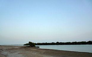 Mangrove swamp in Khor Kalba
