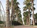 Kamelya World - panoramio (3).jpg