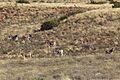 Karoo National Park 2014 03.jpg