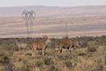 Karoo National Park 2014 13.jpg