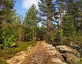 Keljonkangas - forest.jpg
