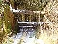 Kidland Forest - geograph.org.uk - 1134481.jpg