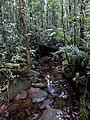 Kinabalu Park, Ranau, Sabah, Malaysia - panoramio (5).jpg