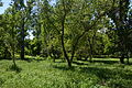 Kirovograd Park Kosmonavtiv 07 (YDS 4783).JPG