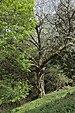 Kirschbaum Bad Froi Klausen Tafel.jpg