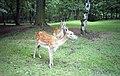 Knowsley Safari Park, Prescot (260222) (9455566236).jpg