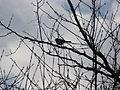 Ko ptica na grani.jpg
