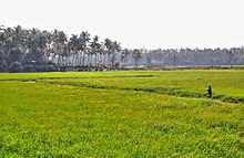 Thrissur Kole Wetlands - Wikipedia