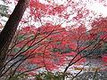 Kobe Municipal Arboretum in 2013-11-16 No,14.JPG