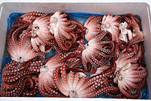 Korea-Jeongseon-Boiled octopus at a market-01.jpg