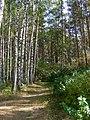 Kotelniki, Moscow Oblast, Russia - panoramio (56).jpg