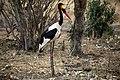 Kruger National Park, South Africa (36775193172).jpg