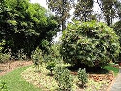 Kunming Botanical Garden - DSC02897.JPG