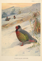 Kuser's Blood Partridge by Lodge and Thorburn.png