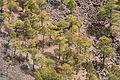 La Palma - Fuencaliente - San Antonio 35 ies.jpg