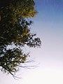 La beauté du ciel.jpg