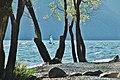 Lago Maggiore - panoramio (16).jpg