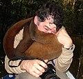 Lagothrix lagotricha - Flickr - Dick Culbert.jpg