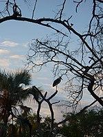 LandscapeZambia2.JPG