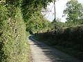 Lane past a wood - geograph.org.uk - 992134.jpg