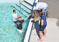 Law enforcement conducts K-9 water training 120918-F-TS228-110.jpg