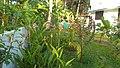 Lawn with flower.jpg