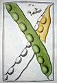 LeBerryais Haricots planche 02.jpg