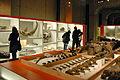 Le Musée des Confluences dévoile ses réserves (Lyon) (5472223004).jpg