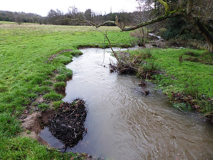 The stream running through Lea Meadows has white-clawed crayfish and brook lampreys, both of which are legally protected. It is part of Ulverscroft Valley. Lea Meadows 12.jpg