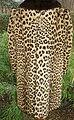 Leopard coat 1960-70 (1).jpg