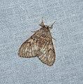 Lepidoptera (36951239842).jpg