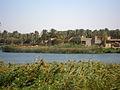 Les bois et le fleuve à Hilla Iraq.JPG