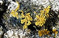 Lichen on Mica - geograph.org.uk - 1370900.jpg