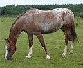 Lichtenwald Pferd.jpg
