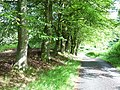 Light and shade, Sidwood, Kielder Forest - geograph.org.uk - 213119.jpg