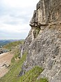 Limestone outcrop - geograph.org.uk - 1356647.jpg