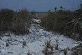 Lithified path. Seaward dune ridge. West Bay (38154486664).jpg