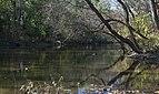 Little Darby Creek 2.jpg
