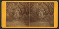 Live Oak Avenue, Bonaventure, from Robert N. Dennis collection of stereoscopic views 6.png