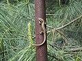 Lizard milan.jpg