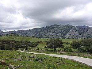 Llanos del Republicano - P1230133.jpg