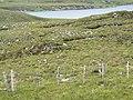 Loch Sian - geograph.org.uk - 498770.jpg