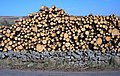 Log-ends in their own lifetime - geograph.org.uk - 392927.jpg
