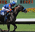Los Alamitos Sept 2014 IMG 6730 (15314646841).jpg