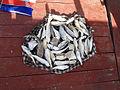 Lot of caught fish Gambia.jpg