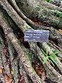 Macassar oil tree at Sir Seewoosagur Ramgoolam Botanical Garden - sign.jpg