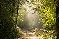 Magical walk (44422353315).jpg