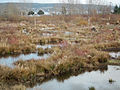 Magnuson wetlands seattle.jpg