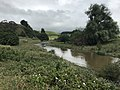 Maharakeke Stream.jpg